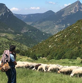 shepherd_prenees